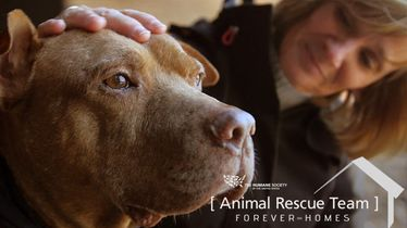 Story 4: Loving Pit Bull Rescued from Dogfighting Raid - Meet Hank