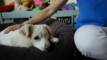 Story 12: Piper, a dog rescued from serious neglect thriving in new home