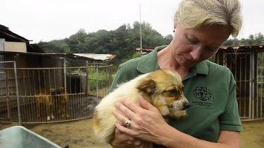149 dogs and puppies saved from slaughter