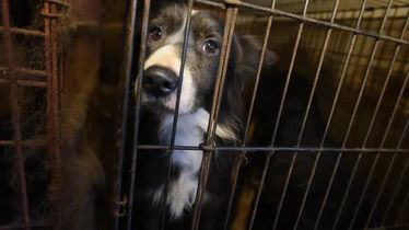 Animals Rescued From House of Horrors