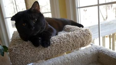 "Story 11: ""Train wreck"" cat - after rescue, Orren finds forever home"