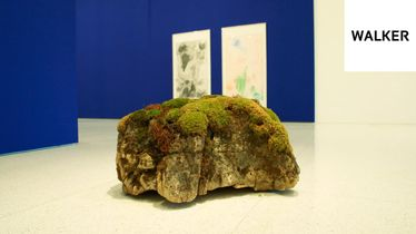 On Curation, Care, and Andrea Büttner's Moss Garden