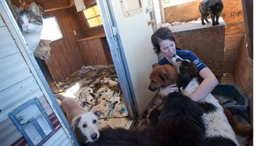 Animal Rescue Team Rescues Hundreds