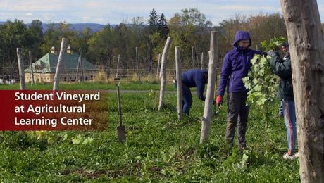 Planting a Vineyard at UMass Amherst