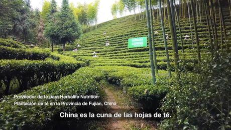 Calidad: De dónde obtenemos nuestro té