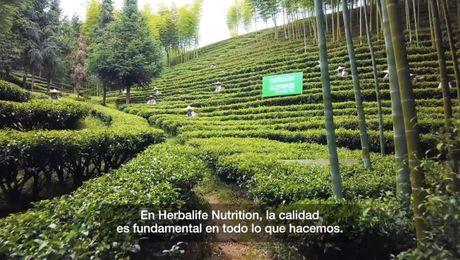 Calidad: De dónde obtenemos nuestro té – subtitulado