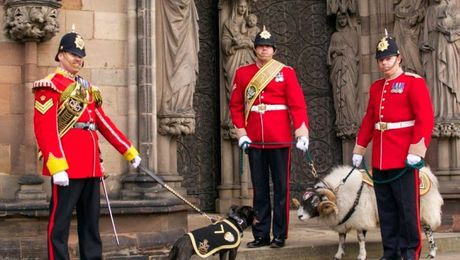 The British Army's Menagerie of Mascots