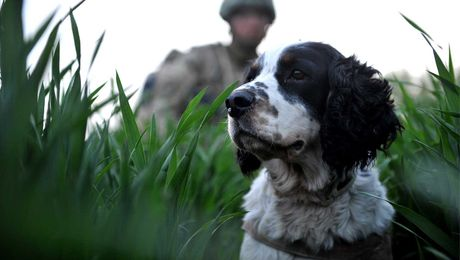 Hero Hounds: The Training Behind Military Working Dogs