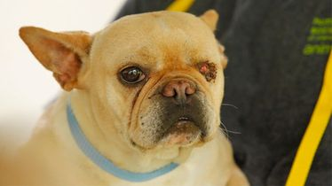 Story 2: Puppy Mill Dog Loses Eye Finds Loving Home