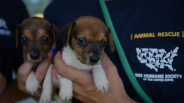 66 dogs rescued from unsafe and unsanitary conditions in Ohio