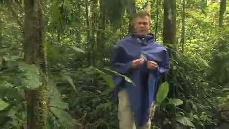 Venturing into Ecuador's Amazon