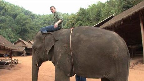 Ride the elephants at the Anantara Golden Triangle Elephant Camp