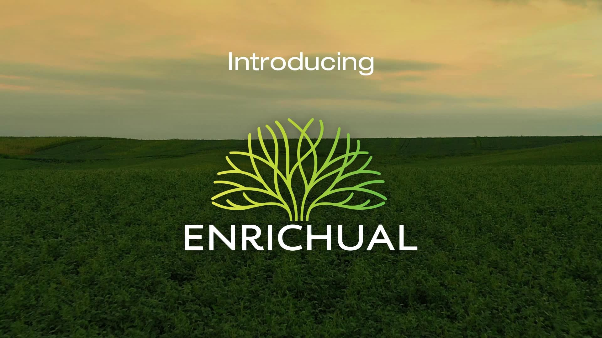 Introducing Enrichual
