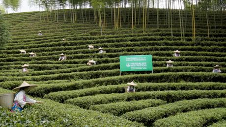 Quality: Sourcing Our Tea
